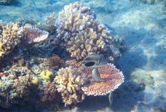 Foto subacuática del paisaje de la costa tropical Arrecife de coral soleado Paisaje marino del arrecife de coral El bucear o el z Fotografía de archivo libre de regalías
