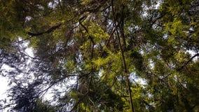 Foto tomada de debaixo de uma árvore no dia imagem de stock royalty free