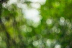 Foto Unfocused en el bosque Imagen de archivo