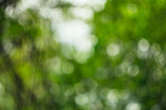 Foto Unfocused na floresta Imagem de Stock