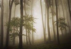 Foto vaga di bella foresta verde con nebbia fotografie stock