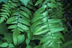 Foto vaga di verde di erba Fotografia Stock