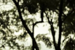 Foto vaga foresta di notte Immagine Stock Libera da Diritti