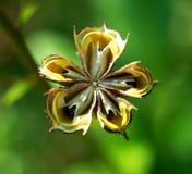 Foto van bloemzaden die Bush branden Stock Fotografie