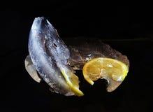 Foto van citroen op het ijs royalty-vrije stock afbeeldingen