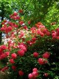Foto van de achtergrond van het de lentelandschap van een bloeiend sierpark Royalty-vrije Stock Afbeeldingen