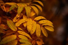 Foto van de herfstbladeren op een boom De gouden Herfst Heldere rode, gele, oranje achtergrond stock afbeeldingen