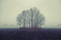 Foto van de herfstbomen Stock Foto's