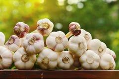 Foto van de knoflookoogst op een houten lijst in openlucht tegen natuurlijke groene achtergrond Organische groenten farming stock afbeelding