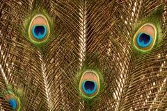 Foto van de veer van de pauwstaart in goud Stock Afbeeldingen