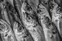 Foto van de verse vissen van de Zwarte Zee Royalty-vrije Stock Foto's