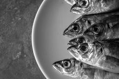 Foto van de verse vissen van de Zwarte Zee Royalty-vrije Stock Afbeelding