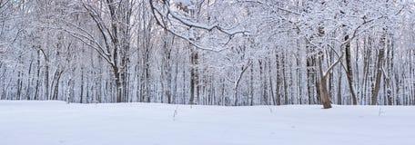 Foto van de Winterdag op Bos, Abstracte Achtergrond, Concept Vrede en Harmonie in Platteland royalty-vrije stock afbeeldingen
