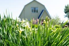 Foto van de zomergras op de achtergrond van het huis stock afbeelding