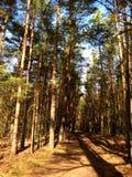 Foto van de zomerlandschap in het bos als bron voor ontwerp, druk Royalty-vrije Stock Fotografie