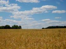 Foto van de zomerlandschap op een Zonnige dag op een gebied als bron voor ontwerp, druk Stock Afbeelding