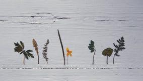 Foto van droge kruiden op houten witte achtergrond stock foto