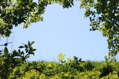 Foto van duidelijke blauwe hemel in natuurlijk groen kader van gras, bladeren en takken van struiken en bomen met ruimte voor tek stock foto