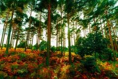 Foto van een bos van eik, okkernoot en kastanjebomen stock afbeelding