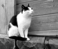 Foto van een close-up grappige grappige kat Stock Foto's