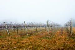 foto van een dag van mist De mist heeft zijn eigen charme stock foto