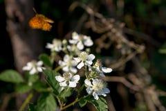 Foto van een groep witte bloemen met oranje en zwarte butte Stock Foto's