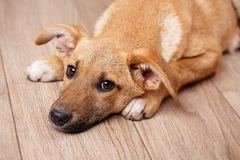 Foto van een huisdier Hond thuis stock foto's