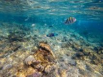 Foto van een koraalkolonie op een ertsader, Egypte royalty-vrije stock foto