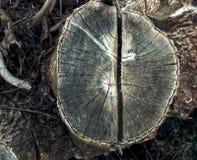 Foto van een oude boomstomp Royalty-vrije Stock Afbeelding