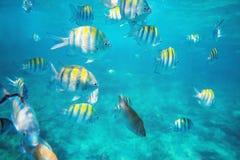 Foto van een tropische Vis op een koraalrif Stock Afbeelding