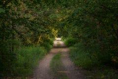 Foto van een weg in het hout dat volledig door bomen wordt omringd Stock Foto's