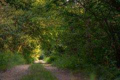 Foto van een weg in het hout dat volledig door bomen wordt omringd Royalty-vrije Stock Afbeeldingen