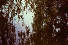 Foto van een wilg boven de rivier Stock Foto