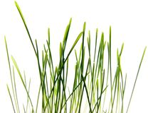Foto van geïsoleerde gras Stock Fotografie