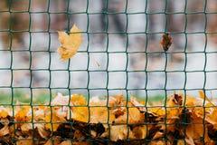 Foto van gele de herfstbladeren op omheining tijdens winderige dag Oranje gebladerte op rooster of metaal netto voor uw achtergro stock afbeeldingen