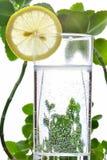 Foto van glas van water en citroen daarin met sommige groene installaties, witte achtergrond Stock Foto