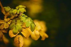 Foto van hond-roze bladeren en bessen De gouden Herfst royalty-vrije stock foto