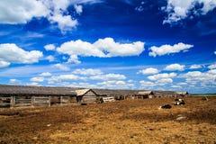 Foto van kalveren in het dorp Stock Foto's