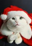 Foto van kat in de hoed van de Kerstman Royalty-vrije Stock Foto