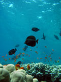 Foto van koraalkolonie Royalty-vrije Stock Foto