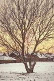 Foto van lege okkernootboom met naakte kroon in de winter Stock Afbeelding