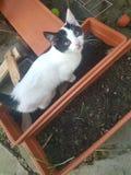 Foto van mijn katje stock foto's