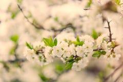Foto van mooie bloeiende boom met prachtige kleine witte stroom Stock Afbeelding
