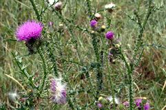 Foto van purper bloemenclose-up Royalty-vrije Stock Fotografie