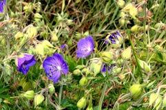 Foto van purper bloemenclose-up Royalty-vrije Stock Afbeeldingen