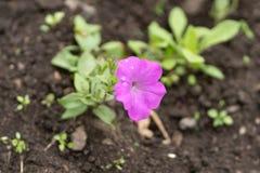Foto van roze bloem op grasachtergrond in zachte nadruk stock foto's
