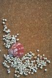 Foto van shell en houten abstracte achtergrond Royalty-vrije Stock Foto's