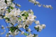 Foto van tot bloei komende boom Stock Foto