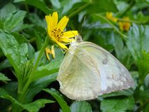 Foto van vlinder met bloem Stock Foto