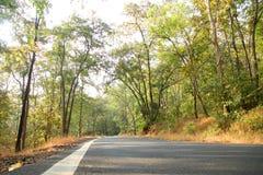 Foto van weg door het bos met mooi zonlicht stock foto's